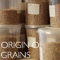 EN origin of grains